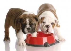 healthierdogs