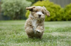 active dog2