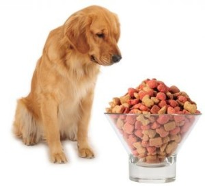 dog food1