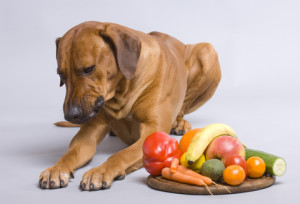 health food for dog1