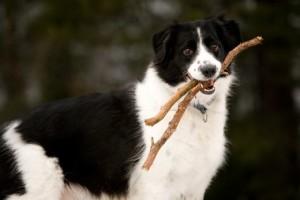 healthydog