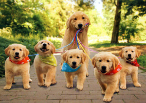 healthydogs1
