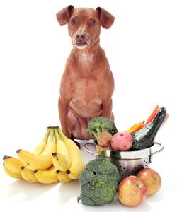 kitchen food for dog