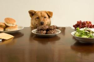 kitchen food for dog2