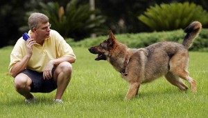 dog training1