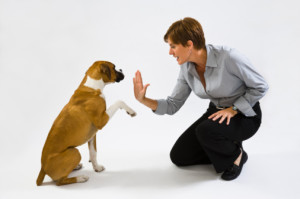 dog training2