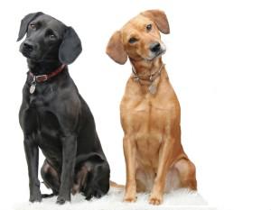 healthier dogs