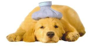sick dog13
