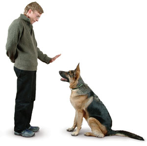 Dog Training Basics - Dog Training Commands