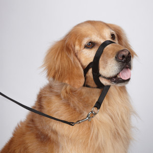 Head collars training