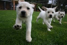 Puppy Training2