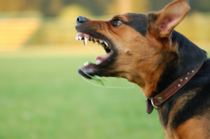 Safeguard from dog attacks