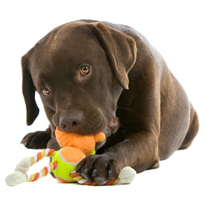 Toys for Your Dog
