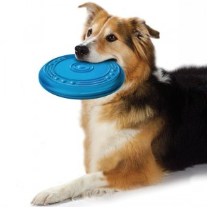Toys for Your Dog1