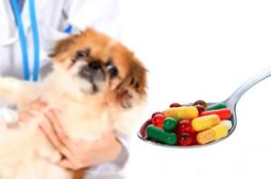 dog taking tablets