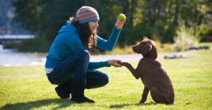 dog training4