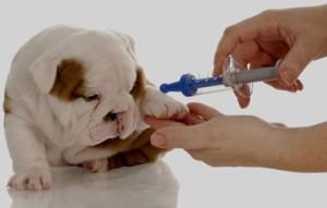 dog vaccination9