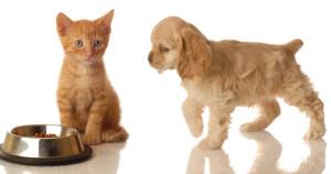 pet food1