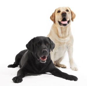 Causes and Treatments of Heartworm in Dogs